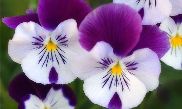 Dünyanın En Güzel Renkleri çiçekler Sevil Uluçay Medya çuvalı
